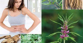 Những bài thuốc từ thảo dược chữa rong kinh hiệu quả