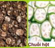 chuoihot1